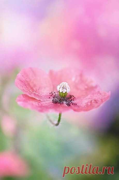 Нежность розового...