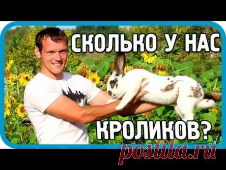 """Сколько кроликов в хозяйстве """"ДОМ В ДЕРЕВНЕ""""?"""