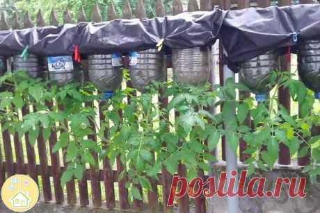 """Как выращивать томаты """"вверх ногами""""☝️☝️☝️   OK.RU"""