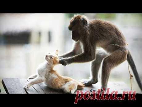 Monkeys VS CATS (HD) [Trip Burger Pets]