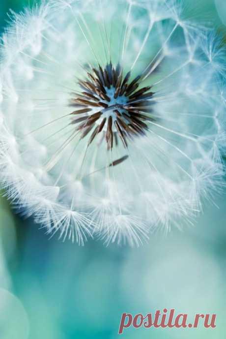Счастье— не в умении правильно жить. Счастье— чувствовать жизнь: находить новые двери возможностей,открывать их ключом надежды и идти туда,откуда доносится уверенный голос судьбы.  ©Милана Павлова