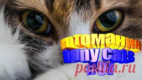 Любите смотреть смешные видео про котов? Тогда мы уверены, Вам понравится наше видео 😍. На котомании Вас ждут: видео коты, видео кота, коты прикол, про кошек смешных, видео кошек, кот смешной, видео с кошками смешное, про кошку смешное видео, видео смешное, видео смешные приколы, видео про кошек смешное до слез, приколы видео смотреть бесплатно. #смешныекоты, #смешныеживотные, #видеосмешные, #котикисмешные, #юморкотики, #смешныекотейки, #funny_animals, #kittycat, #kittylove.
