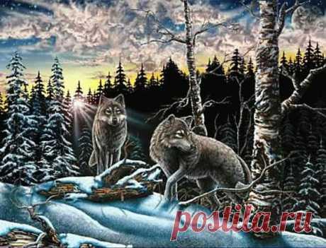 Найдите на картине 15 волков