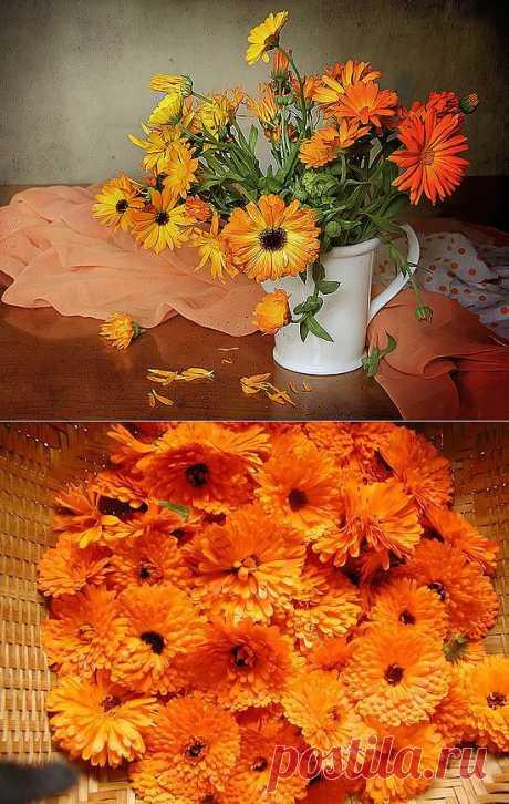 Календула.  Чем больше цветочного солнца посадите вы в своем в саду, тем лучше будет ваше настроение и выше работоспособность, а о здоровье и говорить нечего. Не зря в старину считали, что календула — солнце на клумбе заряжает здоровьем всякого, кто на нее долго смотрит.