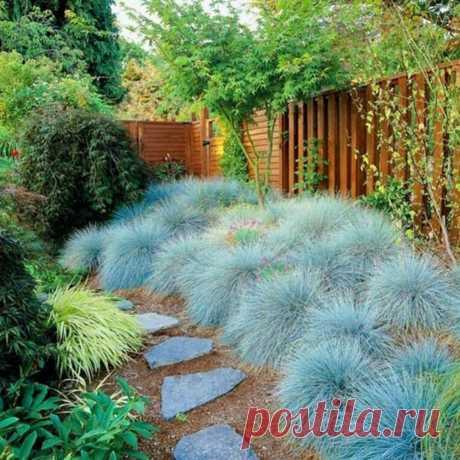 Модный ландшафт: 10 трав, которые украсят ваш сад — Roomble.com