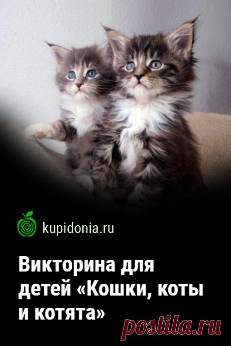 Викторина для детей «Кошки, коты и котята». Развлекательный тест о кошках из серии «Домашние животные». Проверьте свои знания!