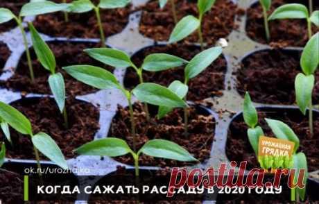 КОГДА САЖАТЬ РАССАДУ В 2020 ГОДУ - КАЛЕНДАРЬ ПОСАДКИ РАССАДЫ       Посев семян томатов на рассаду в 2020 году благоприятные дни  2 (после 11:58), 3, 4 (до 18:15), 4 (после 18:21), 5, 6 (до 20:43), 7,11, 30, 31 (до 19:37) января.  1,2 (до 18:51), 3, 4, 7 (до 09:04), 8, 27, 28 февраля.  1, 2 (после 09:44), 3 (до 17:21), 6 (после 14:55), 7, 8 (до 17:00), 11, 29 (после 18:49), 30 марта.  Посев на рассаду семян перца и баклажанов 15, 16, 17 (до 08:11), 20, 21,22 (после 12:46), 23, 24 (до 19