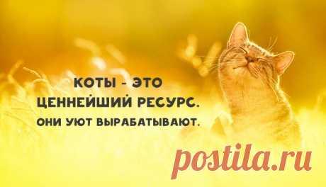 Я — кот, это — моя работа. Тяжелая, конечно, но кто-то должен ее делать.