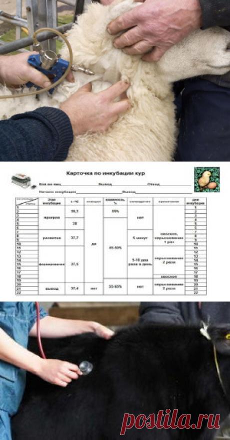 Каратин уменьшает гибель новорожденных козлят и ягнят - БиоКорова