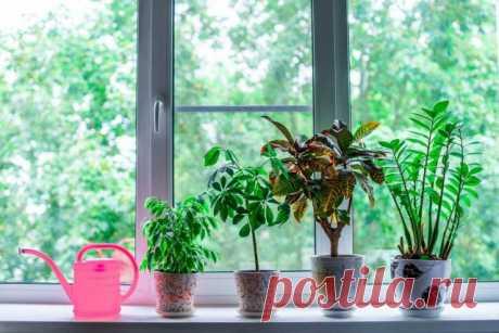 5 мифов о комнатных растениях, которые помогут их погубить. Полив, пересадка, подкормки. Фото — Ботаничка.ru