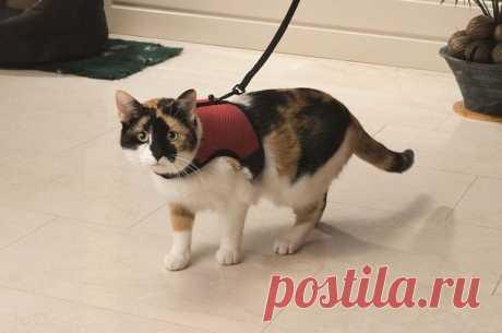 Основные 10 правил перевозки кошки в поезде и электричке: подготовка документов и вещей в дорогу