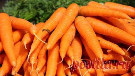 Как сохранить морковь на зиму  Морковь - один из популярных овощей, употребляемых зимой. По сравнению с другими корнеплодами, она на первом месте по длительности хранения. Вырастить хороший урожай это здорово, но надо знать, как п…