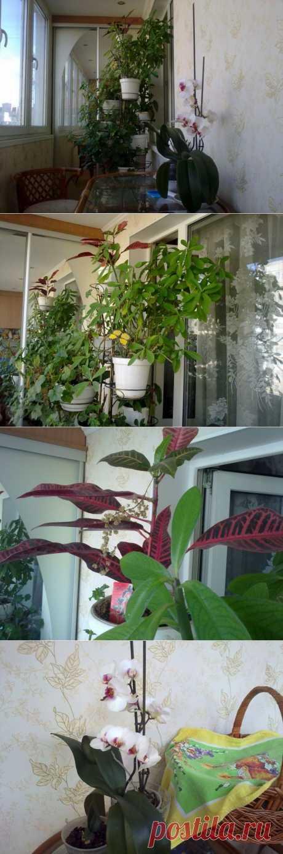 Садочек на утепленной лоджии. | Школа Ремонта