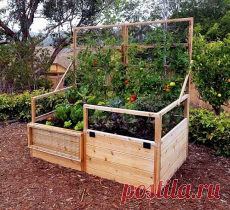 Умный огород без хлопот или о пользе узких грядок