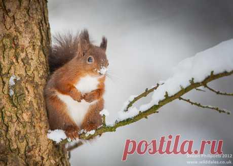 15 волшебных фотографий животных в период зимы | PhotoWebExpo | Яндекс Дзен