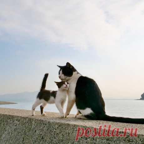 """Если рядом кошка, все становится особенным, даже одиночество.  Джеймс Боуэн, """"Мир глазами кота Боба""""."""