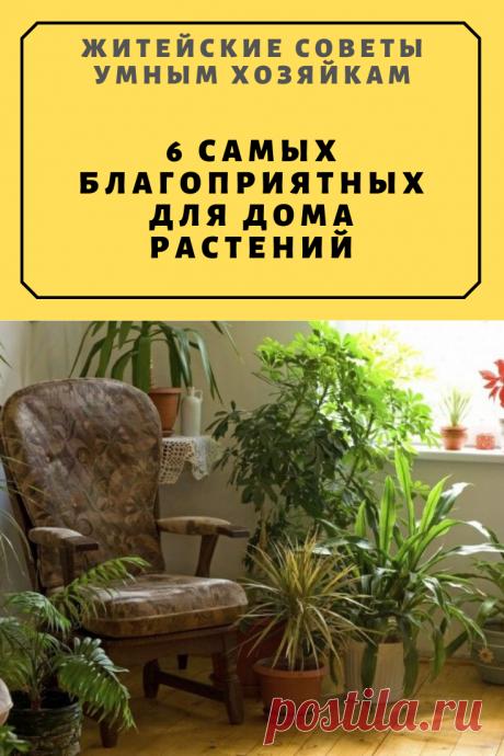 6 самых благоприятных для дома растений | Житейские Советы