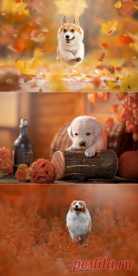Собака на осень похожая... Фотограф Светлана Писарева