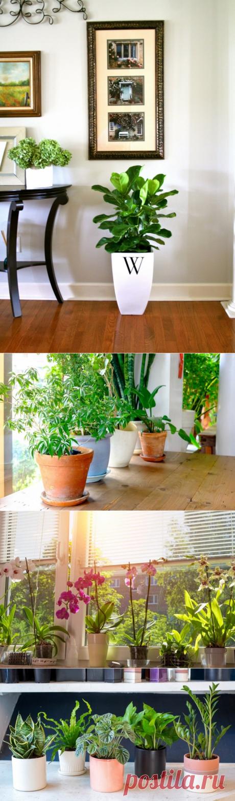 Подбор комнатных растений, подходящих к условиям в вашем доме