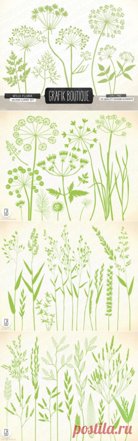 Wilde Kräuter-Blumen Kontur Vektor-Cliparts von GrafikBoutique