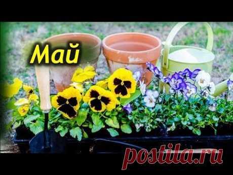 Лунный календарь цветовода на май 2021 прекрасный помощник для каждого садовода