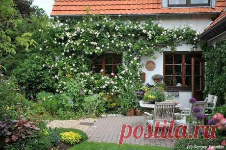 5 идей для коттеджного сада | Сады и цветы | Яндекс Дзен
