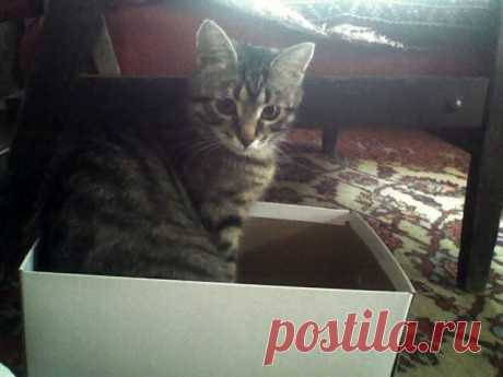 Сижу в коробочке))))