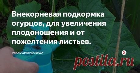 Внекорневая подкормка огурцов, для увеличения плодоношения и от пожелтения листьев.