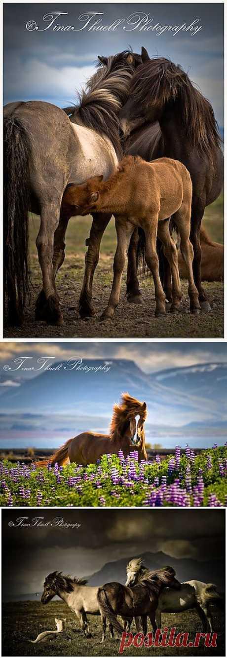 Сказочно прекрасные лошади от Тины | Живой фотоблог