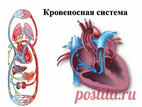 Рассказываю о двух важных упражнениях для здоровья сердечно-сосудистой системы. Тренировка ног для поддержания здоровья.   health and beauty   Яндекс Дзен