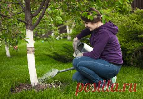 Как ухаживать за яблоней и грушей осенью Какой уход нужен яблоне и груше осенью