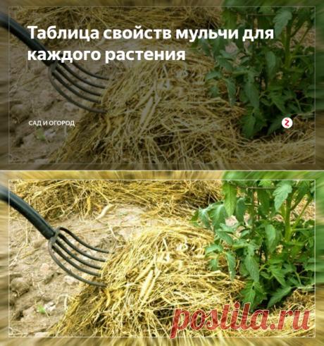 Таблица свойств мульчи для каждого растения   Сад и огород   Яндекс Дзен