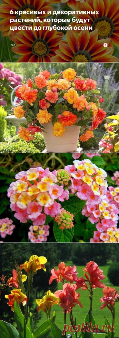 6 красивых и декоративных растений, которые будут цвести до глубокой осени | САД | Яндекс Дзен