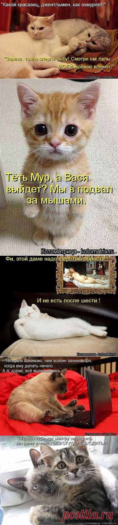 (+1) тема - Самые прикольные котоматрицы | Четвероногий юмор