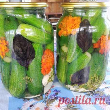 Огурцы консервированные с базиликом и цветами бархатцев рецепт с фото пошагово - 1000.menu