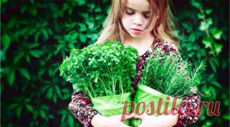 Продукты-оборотни: чем на самом деле являются кумин, кориандр и другие пряные травы?