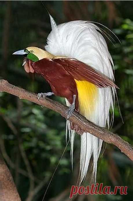 Красивые птицы