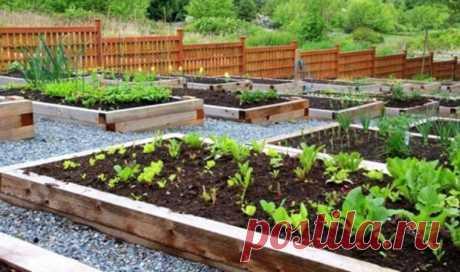 Как создать огород, который не требует много времени на уход