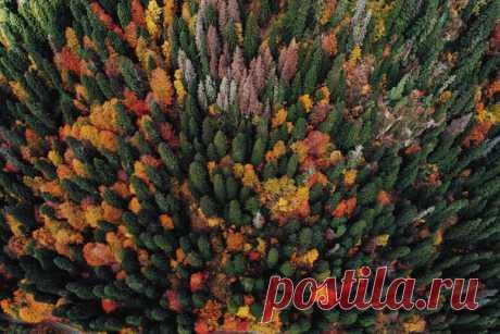Осенний лес в горах. Посёлок Домбай, Карачаево-Черкессия. Автор кадра – Михаил Лежнёв: