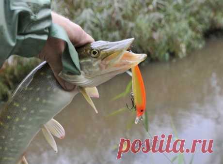 10 факторов, которые определяют активность и местоположение рыбы - Мужской журнал JK Men's