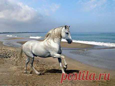 Обои животные, лошади, голубой, природа, небо, берег, грива, конь, песок, волна, волны, море скачать обои для рабочего стола,картинки на рабочий стол,заставки,изображения из раздела Животные Лошади