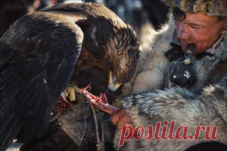 Монголия. Фестиваль охотников с беркутами. Фото сделал Влад Соколовский.