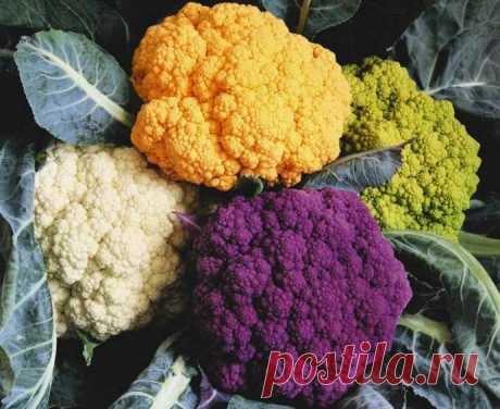 Как хранить цветную капусту в домашних условиях, в квартире