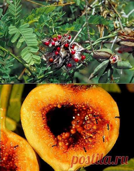 Коварная природа | НАУКА И ЖИЗНЬ