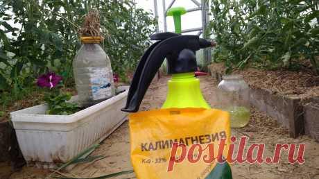 Я всегда рассматриваю нижние листья томата перед тем, как их удалять. Почему это важно? | Посад | Яндекс Дзен