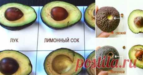 Применение авокадо - Женская красота