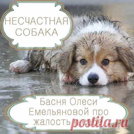 Несчастная собака – басня в стихах Олеси Емельяновой про жалость к себе. Казалось бы, все хотят быть счастливыми, но есть такие люди, которые нарочно обрекают себя на страдания, подобно героине этой басни в стихах. Сочувствовать им и пытаться помочь – пустая трата времени.