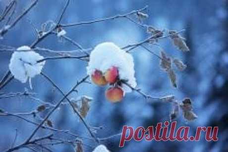 Сегодня 14 ноября в народном календаре Кузьминки