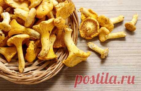 Грибы лисички: полезные свойства и вкусные рецепты Внешний вид лисичек сам по себе выделяет их из массы остальных грибов. Не менее уникальными являются и полезные свойства этого продукта, поскольку многие из них относятся исключительно к грибам...