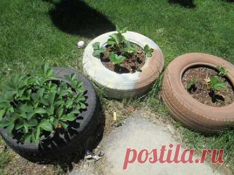 Клубнику на грядках больше не выращиваю, использую для этого самодельные клумбы с сеткой: собирать удобнее и птицы не вредят